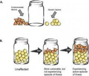 Empty jar that gets filled with yellow balls (genetic factors) and orange triangles (environmental factors). Mental ill-health occurs when the jar is full.